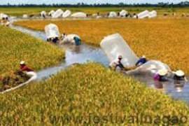 phát triển nông nghiệp