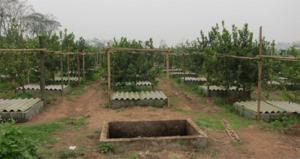 trang trại nuôi trùn