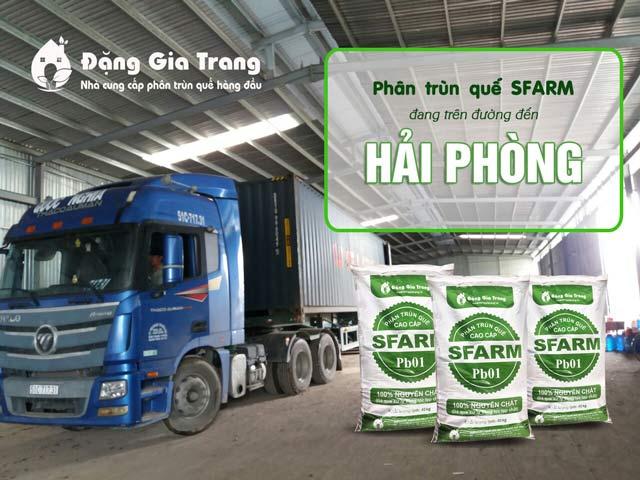 phan-trun-que-sfarm-container-di-hai-phong