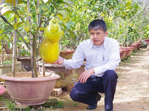 chanh-yen-khong-lo-trun-que-sfarm