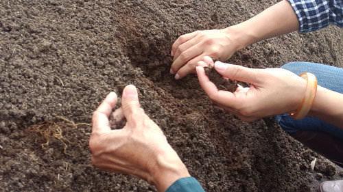 Độ ẩm cho phân trùn quế