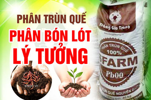 phan-trun-que-phan-bon-lot-ly-tuong