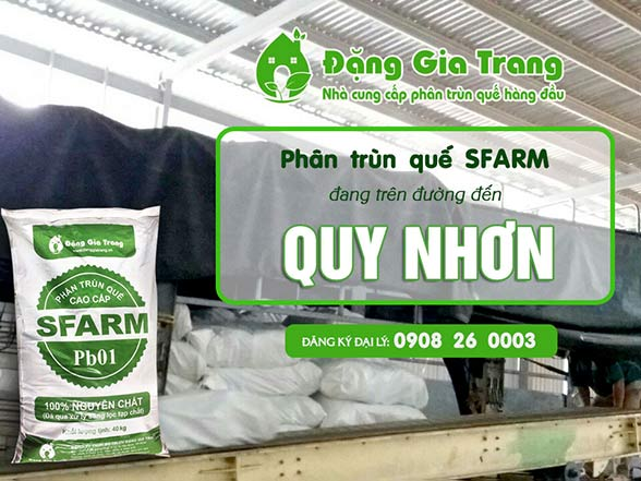 phan-trun-que-sfarm-container-di-QUY-NHON-6