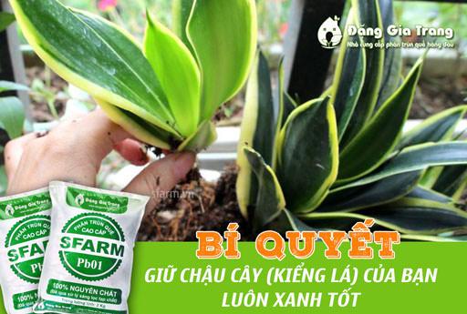 bi-quyet-giup-chau-cay-kieng-la-luon-xanh-tot-1