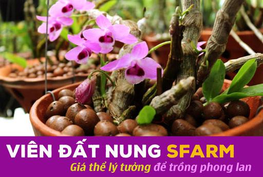 vien-dat-nung-gia-the-ly-tuong-trong-phong-lan