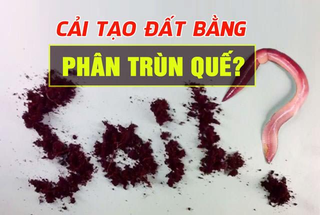 cai-tao-dat-bang-phan-trun-que-2
