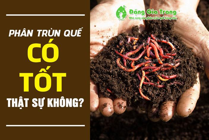 phan-trun-que-co-tot-khong