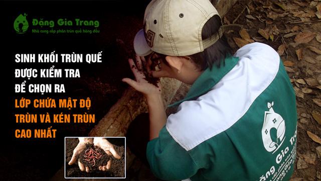 sinh-khoi-trun-que