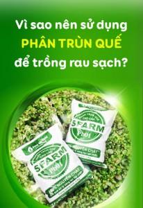 vi-sao-nen-su-dung-phan-trun-que-de-trong-rau-sach-1