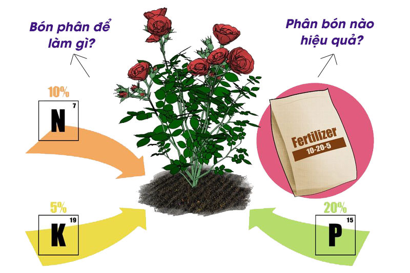 bon-phan-hoa-hong