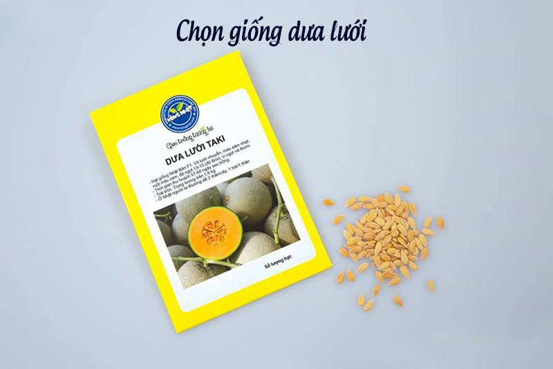 chon-giong-dua-luoi-800x533