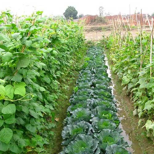 canh tác nông nghiệp hữu cơ
