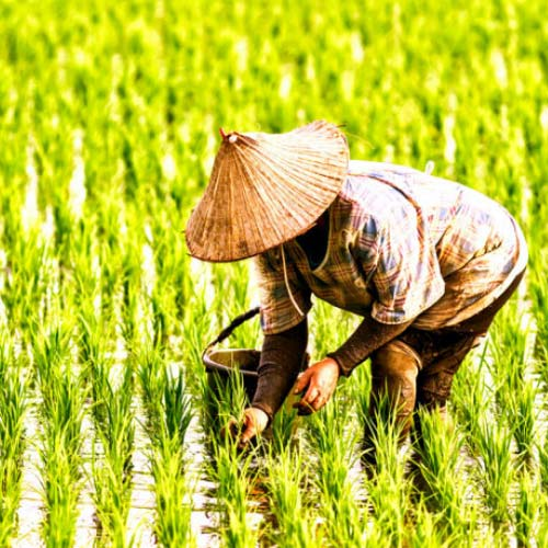 Image result for nông dân