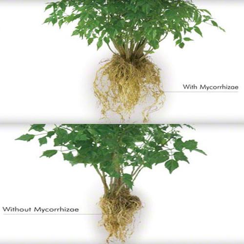 nam-mycorrhizae