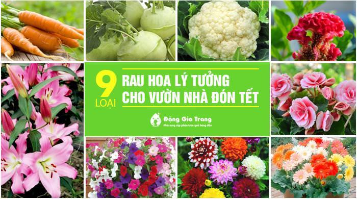 9 loai rau hoa ly tuong cho vuon nha don tet
