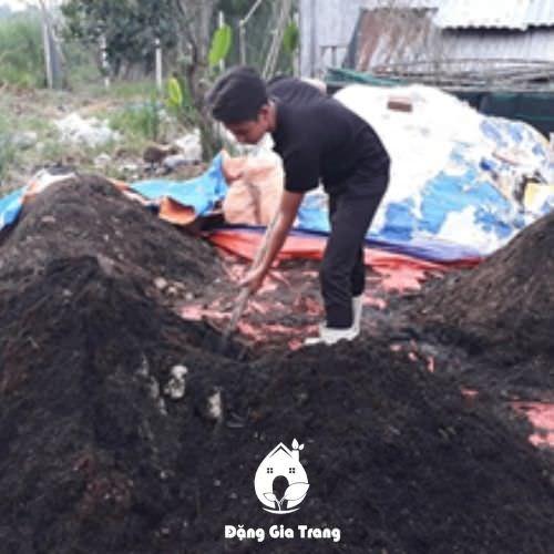 Trộn giá thể trồng hoa cát tường chậu